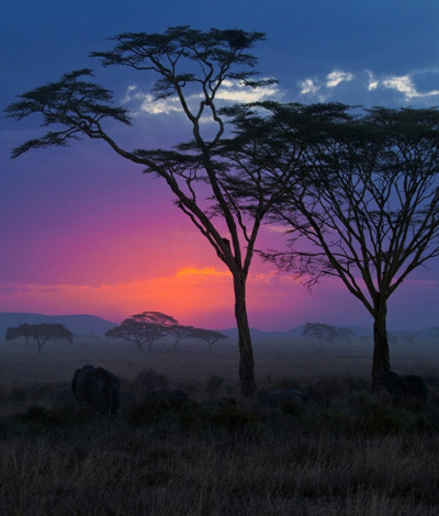 Best Time For Safari